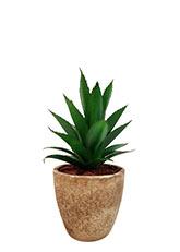 Cactus Aloe Vera - Verde